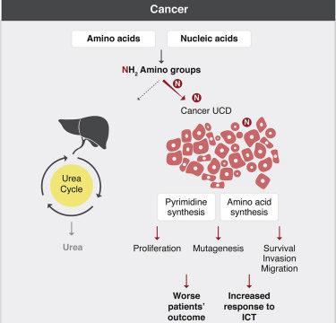 Disrupted nitrogen metabolism might spell cancer
